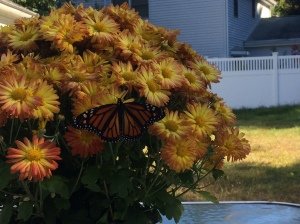 Monarch visiting Mums