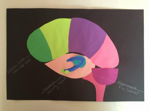The Brain: Prefrontal Cortes, Hippocampus & Amygdala